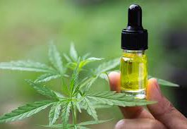 Cannabis oil - onde comprar - opiniões - Encomendar